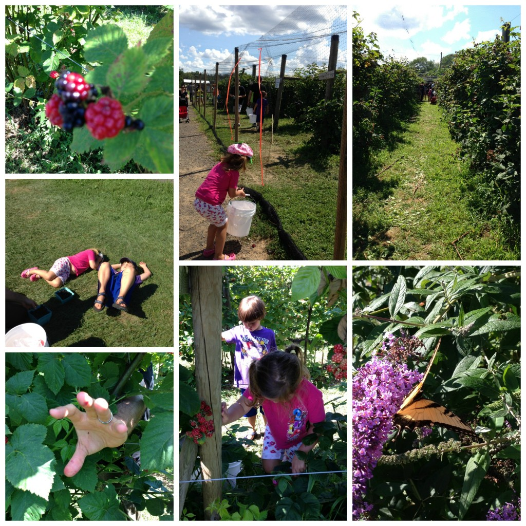 berry picking Collage